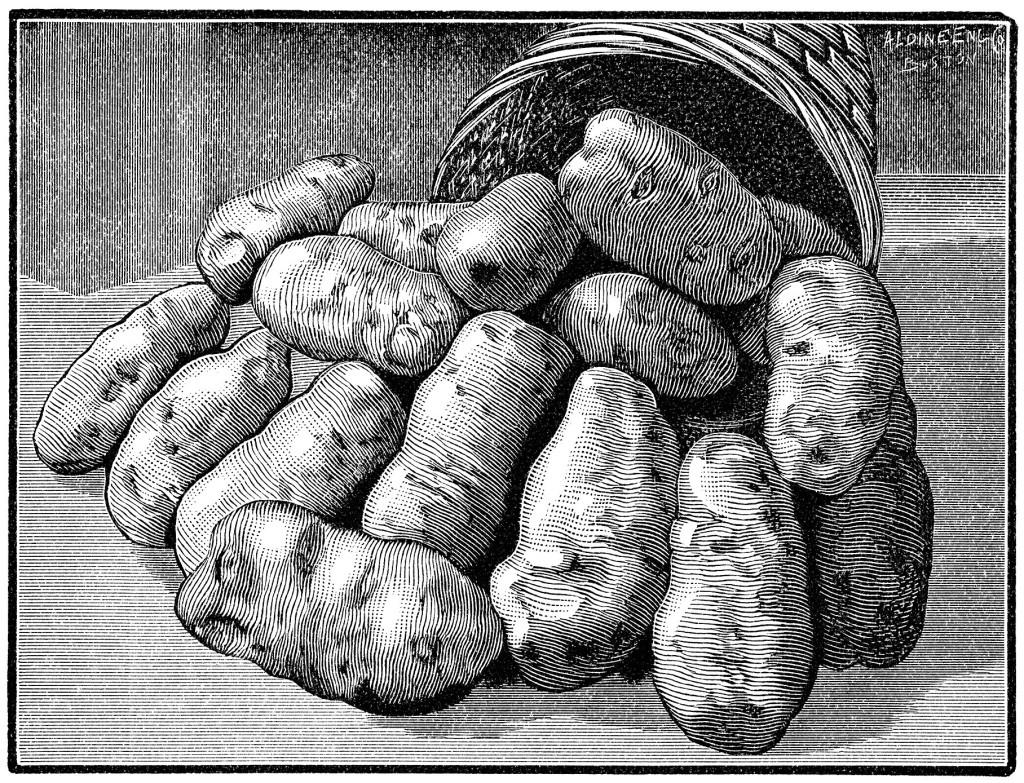 kartulid korvis